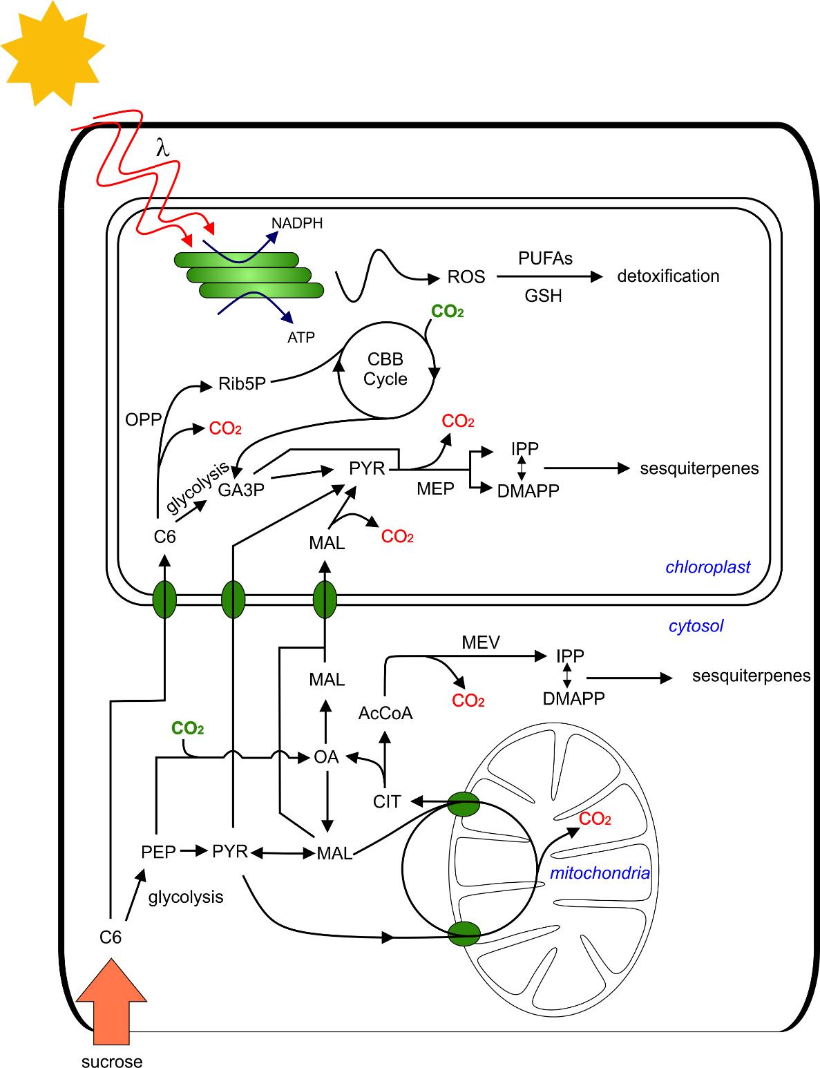 Energie Für Chemische Barrieren Leibniz Institut Für